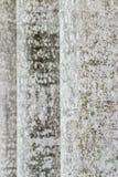 Abstrakt textur av stammen av palmträdet Royaltyfria Bilder