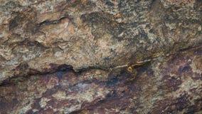 Abstrakt textur av stenbakgrund Arkivfoton