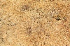 Abstrakt textur av torrt gräs Royaltyfri Fotografi