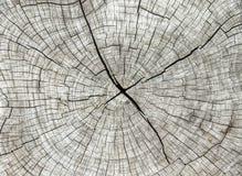 Abstrakt textur av trädstubben, sprickaträ Royaltyfria Foton