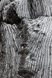 Abstrakt textur bildade vid detaljen av en vit Royaltyfria Bilder