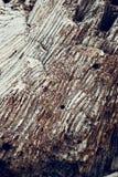 Abstrakt textur bildade vid detaljen av en vit Royaltyfri Foto