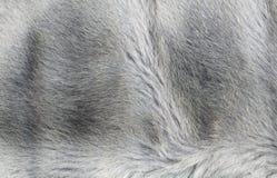 abstrakt textur för bakgrundsclosepäls upp Fotografering för Bildbyråer
