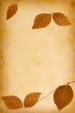abstrakt textur för bakgrundsgrungeleafs Royaltyfria Foton