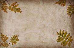 abstrakt textur för bakgrundsgrungeleafs Arkivbilder