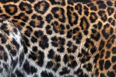 abstrakt textur för bakgrundsleopardhud Arkivfoto