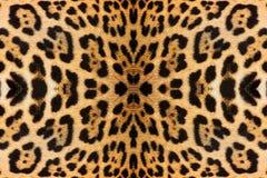 abstrakt textur för bakgrundsleopardhud Royaltyfri Bild