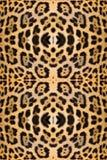 abstrakt textur för bakgrundsleopardhud Royaltyfri Foto