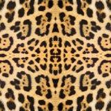 abstrakt textur för bakgrundsleopardhud Royaltyfri Fotografi