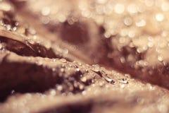 Abstrakt textur för beige Royaltyfri Foto
