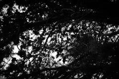 Abstrakt textur för fonder Arkivfoton