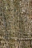 Abstrakt textur för trädskäll arkivfoton