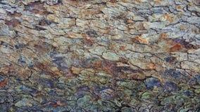 Abstrakt textur för trädskäll Arkivbilder