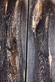 Abstrakt träbakgrund, textur av trä royaltyfria bilder