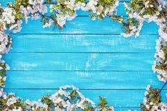 Abstrakt träblå bakgrund med att blomma körsbärsröda blomningar Arkivbild