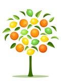 Abstrakt träd med olika citrusfrukter. Arkivbild