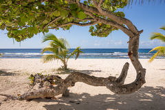 Abstrakt träd på den tropiska stranden Arkivbild