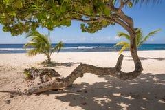 Abstrakt träd på den tropiska stranden Royaltyfri Foto