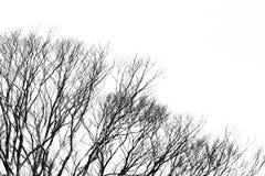 Abstrakt trädmodellbakgrund med copyspace i svart och whi Arkivfoto