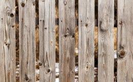 Abstrakt trätextur för staketbakgrundsdetalj Royaltyfria Bilder
