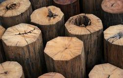 abstrakt tree för bakgrundsmodellstubbe Arkivbild