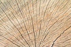 abstrakt tree för bakgrundsmodellstubbe Royaltyfria Foton