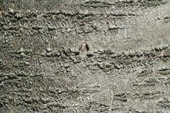 abstrakt tree för bakgrundsskälltextur Fotografering för Bildbyråer