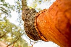 abstrakt tree för oak för bakgrundsskälldesign Arkivfoton