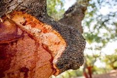 abstrakt tree för oak för bakgrundsskälldesign Fotografering för Bildbyråer