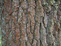 abstrakt tree för oak för bakgrundsskälldesign Royaltyfria Foton