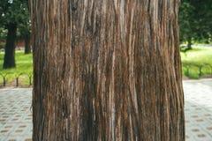 abstrakt treesikt Royaltyfri Bild