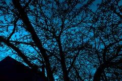 Abstrakt treesilhouette Royaltyfri Fotografi
