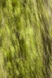 Abstrakt treeskäll Arkivfoto