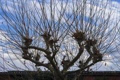 Abstrakt treetopsikt Arkivfoto