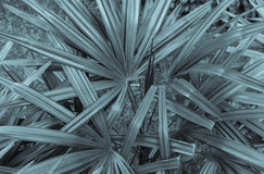 Abstrakt tropisk bladtexturbakgrund Royaltyfria Foton