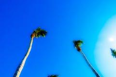 Abstrakt tropisk himmelsikt Arkivbild