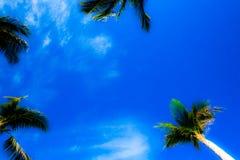 Abstrakt tropisk himmelsikt Fotografering för Bildbyråer