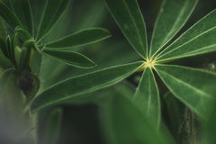 Abstrakt tropisk natur, exotiskt makrogräsplanblad Arkivbild