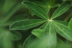 Abstrakt tropisk natur, exotiskt makrogräsplanblad Royaltyfria Bilder