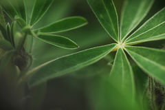 Abstrakt tropisk natur, exotiskt makrogräsplanblad Royaltyfri Foto