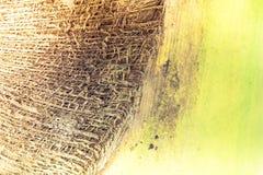 Abstrakt tropisk palmträdtexturbakgrund Royaltyfria Bilder