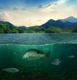 Abstrakt tropiskt undervattens- havsliv Arkivfoto
