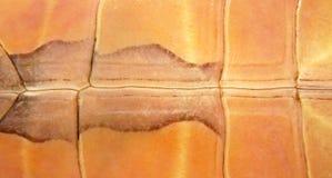 abstrakt undersida för bakgrundsskalsköldpadda Arkivbild