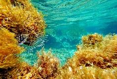 Abstrakt undervattens- plats av havet, Turkiet Arkivfoton