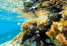 Abstrakt undervattens- plats av havet, Turkiet Royaltyfri Fotografi