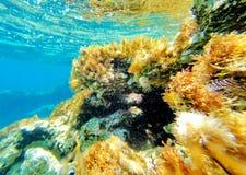 Abstrakt undervattens- plats av havet, Turkiet Royaltyfri Foto