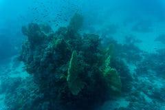 Abstrakt undervattens- plats, korall och fiskar Fotografering för Bildbyråer