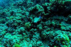 Abstrakt undervattens- plats, korall och fiskar Arkivfoto