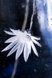 Abstrakt undervattens- sammansättning med den torkat blomman, bubblor och ljus Royaltyfri Foto
