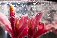 Abstrakt undervattens- sammansättning med oskarpa orkidékronblad Royaltyfria Bilder